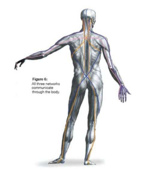 "The ""Fascia""nating World of Fascia"